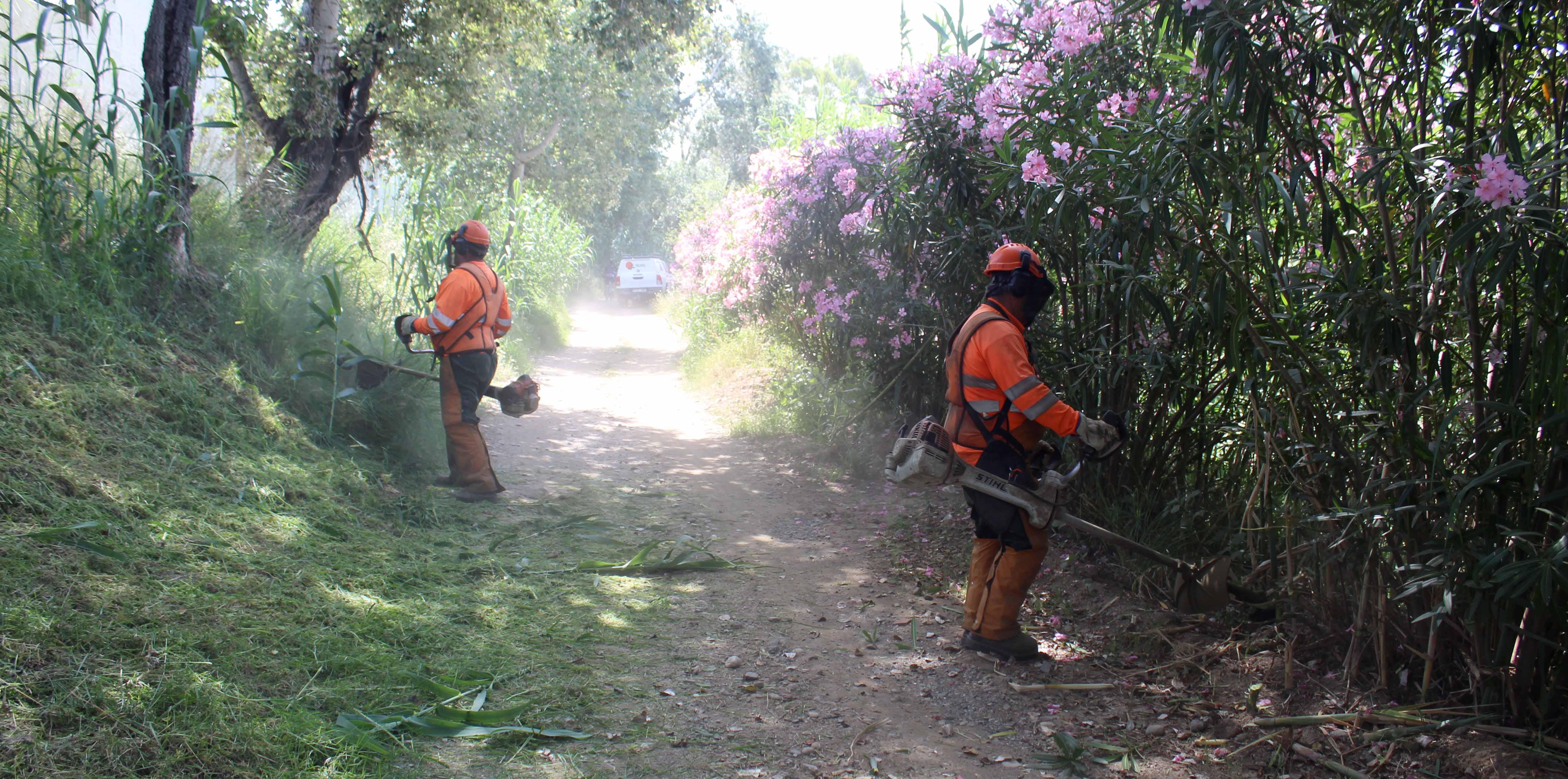 Parques y Jardines intensifica las tareas de desbroce de caminos para prevenir incendios