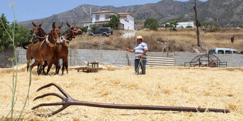 La Peña Caballista de Mijas organiza este sábado la tradicional trilla