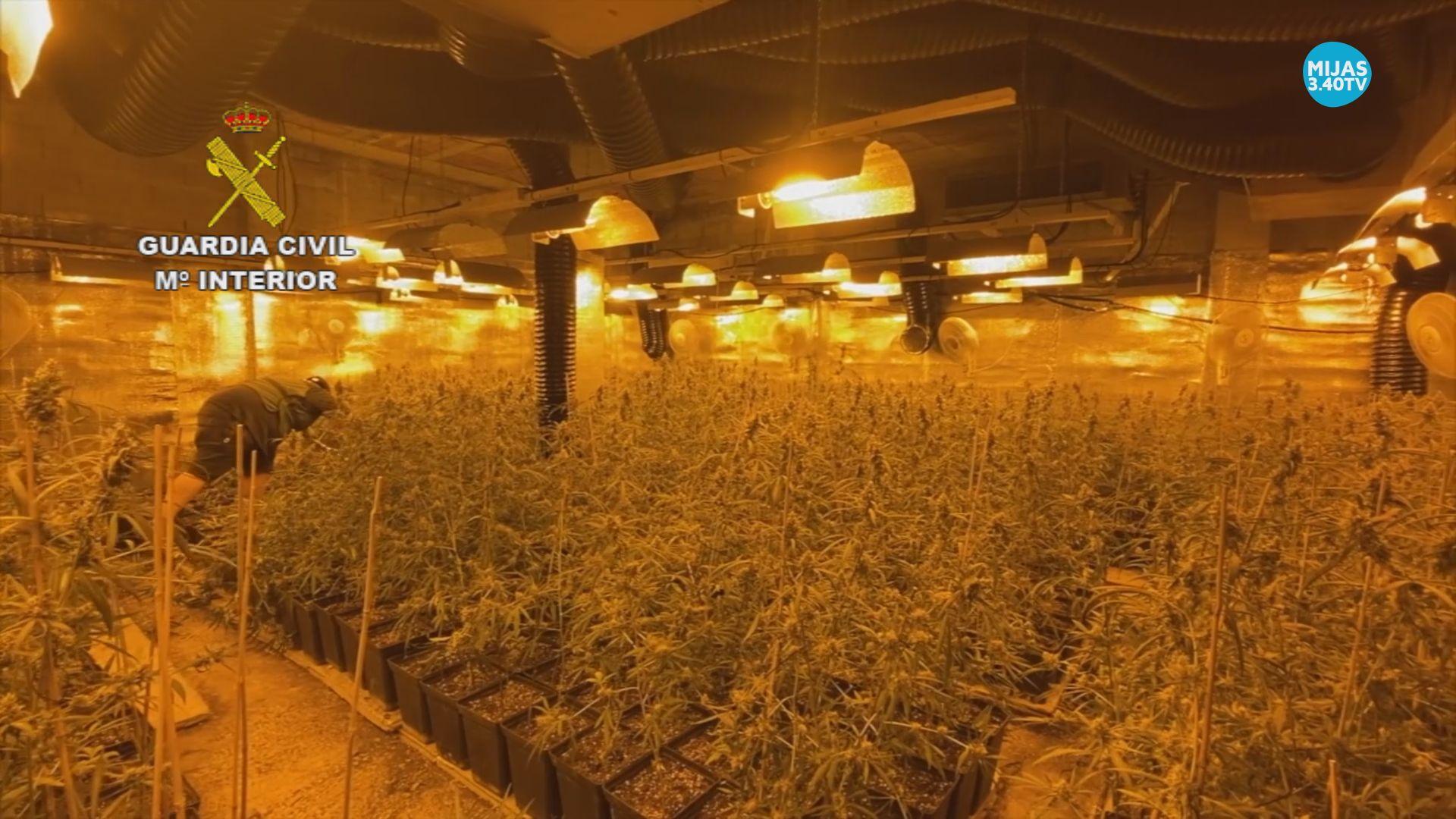 Desarticulan un grupo dedicado al cultivo de marihuana en Coín, Alhaurín El Grande y Mijas