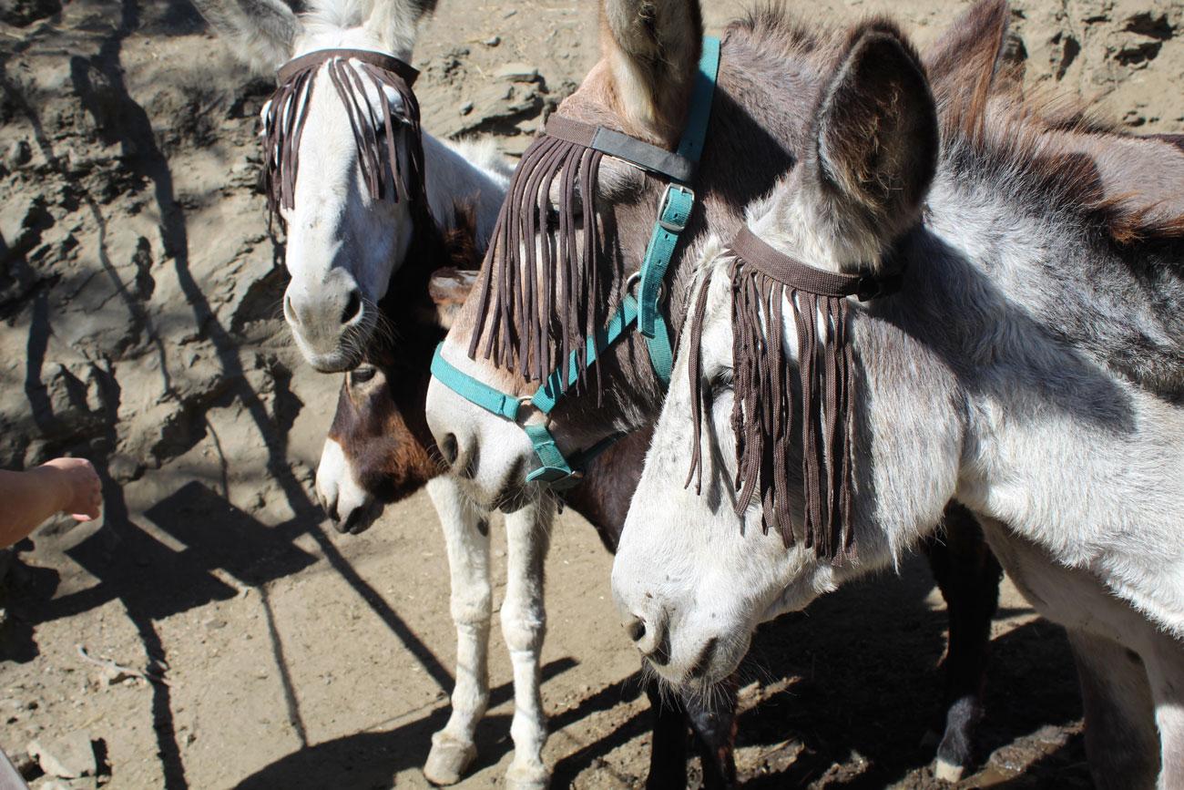 Naturaleza y artesanía en la jornada de puertas abiertas de Donkey Dreamland